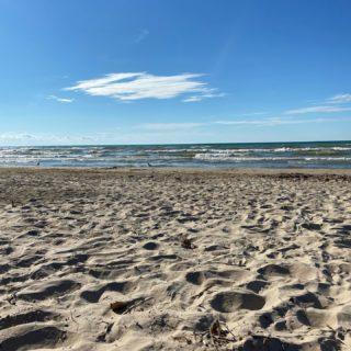 First day at the beach 🥰 #dogsofinstagram #jackchi #jackhuahua #doggo #ipperwashbeach